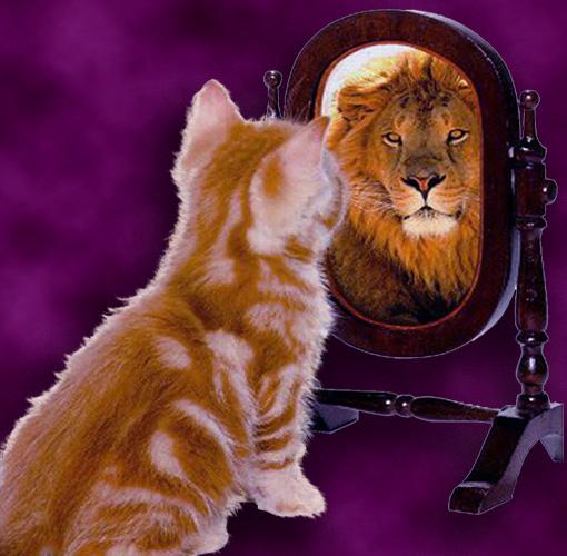 kitten-lion-mirror1