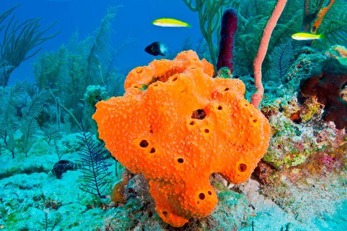 live sponge